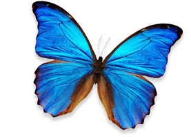Onward Consultancy Butterfly Image